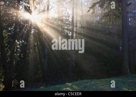 Sonne durch Morgennebel und Bäume; Happy Valley, Oregon, Vereinigte Staaten von Amerika - Stockfoto