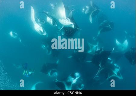 Freitaucher Filme Manta-Rochen Vortex-Fütterung in Hanifaru Bay, Hanifaru Lagune, Baa Atoll, Malediven - Stockfoto