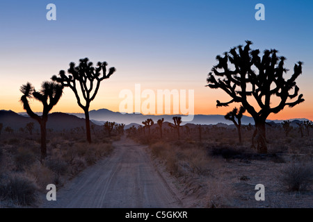 Joshua Tree, Joshua Tree Nationalpark, Mojave-Wüste, Kalifornien, USA - Stockfoto