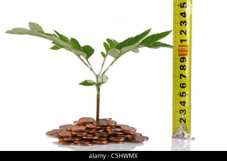 Maßband Vermessung Pflanze, Konzept für Wachstum und Effizienz der Unternehmen - Stockfoto