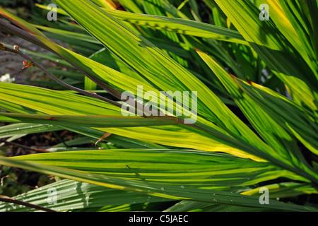 Crocosmia lässt im frühen Herbst Farben - Stockfoto