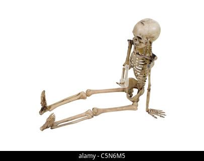 Das Skelett ist der interne Rahmen des Körpers - Pfad enthalten ...