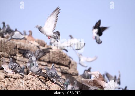 Tauben fliegen - Stockfoto