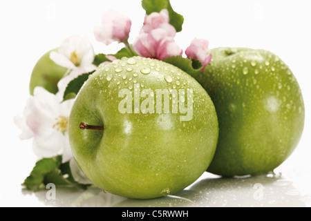 Grüne Äpfel mit Wassertropfen im Hintergrund Apfelblüte, Nahaufnahme - Stockfoto
