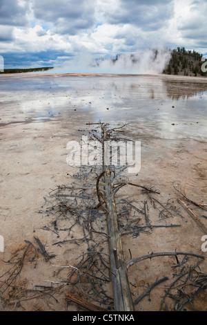 USA, Wyoming, Grand Bildobjekte Frühling, toter Baum im Vordergrund - Stockfoto