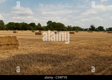 Strohballen auf einem kürzlich geernteten Feld in worcestershire - Stockfoto
