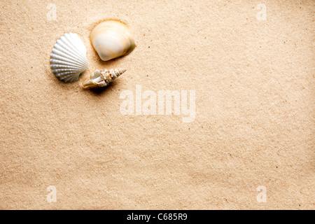 Eine Shell auf dem Hintergrund eines goldenen warmen sand - Stockfoto