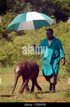 VERWAISTE ELEFANTEN WIRD GESCHÜTZT DURCH SEINE HÜTER AUS DER SONNE ELEFANT SHELDRICK WAISENHAUS NAIROBI KENIA - Stockfoto