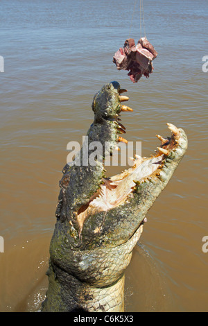 Jumping Crocodile Cruise, Adelaide River, Northern Territory, Australien - Stockfoto