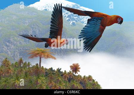 Zwei schöne Papageien fliegen gemeinsam in ihre Dschungel-Paradies. - Stockfoto