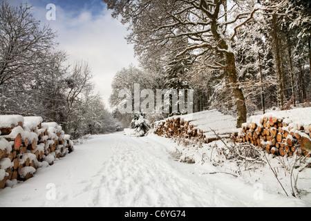 Winter Schnee Szene, Houghton Wald, West Sussex - Stockfoto