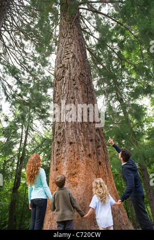 Familie stehen zusammen auf Basis des hohen Baum, Hand in Hand, Rückansicht - Stockfoto