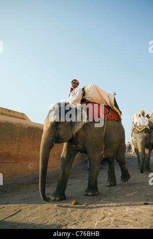 Elefanten, die Rückkehr nach unten aus dem historischen Amber Fort, um mehr Touristen in Jaipur, Indien Rajasthan - Stockfoto