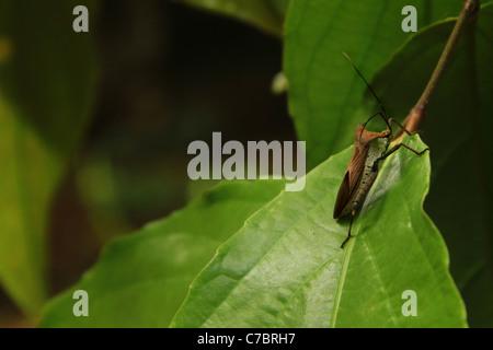 Garten Bug auf grün - Stockfoto