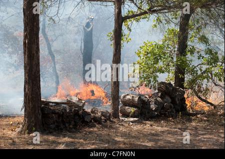 Flammen aus einem Lauffeuer vorab in den Pinsel entlang der U.S. Highway 71 westlich von Bastrop, Texas. - Stockfoto