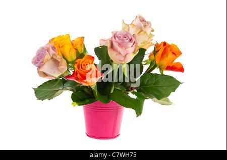Strauß bunte Rosen in rosa Eimer isoliert auf weiß Stockfoto