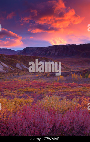 Sonnenuntergang in Sable Pass, Denali-Nationalpark, Alaska. - Stockfoto