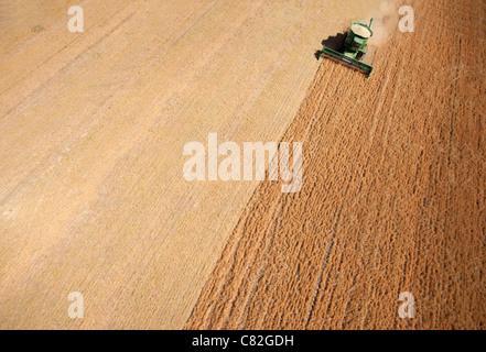 Hintergrund Textur Antenne von einem Mähdrescher ernten Linsen - Stockfoto