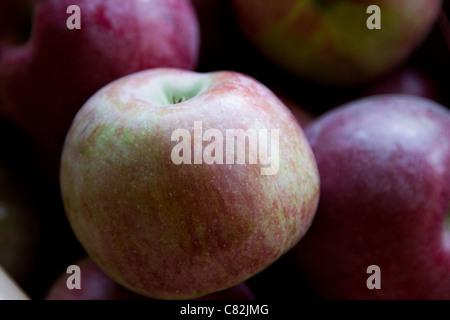 Prächtig Macoun Apfel Stockfoto, Bild: 39396458 - Alamy &DR_49