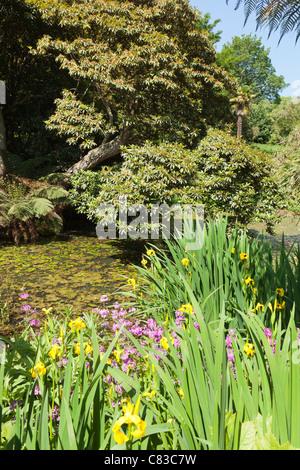 Der Dschungel an die verlorenen Gärten von Heligan, Pentewan, Austell, Cornwall - Stockfoto