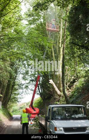 Ein Baumpfleger, Fällen von Bäumen über eine Hubarbeitsbühne in einer tiefen engen Gasse an Irthington, Cumbria - Stockfoto