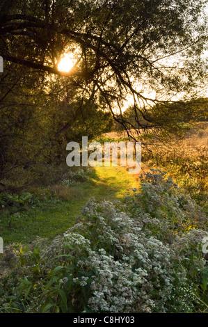 Weg durch Herbst Feld am Mount Saint Francis in Floyd County, Indiana - Stockfoto