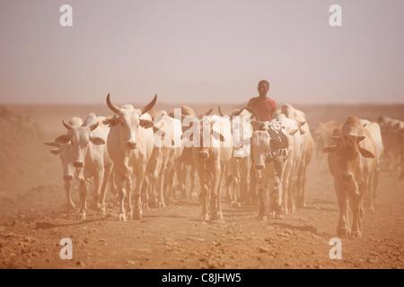 Rinder Herder im Norden Kenias auf der Straße zwischen Isiolo und Marsabit - Stockfoto