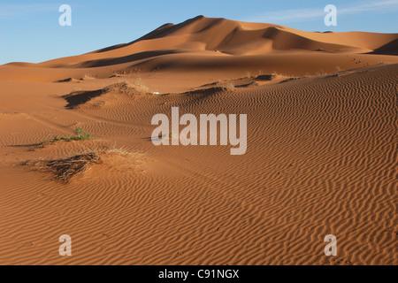 Sanddünen des Erg Chebbi in der Sahara-Wüste in der Nähe von Merzouga, Marokko. - Stockfoto