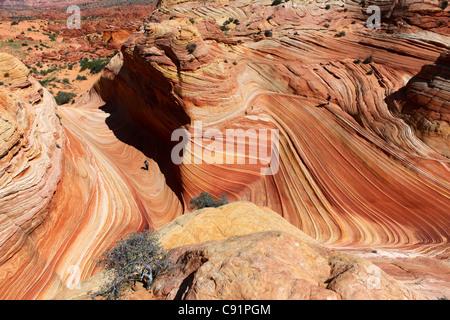 Wanderer und Sandstein-Formationen, The Wave, Coyote Buttes, Vermilion Cliffs National Monument - Stockfoto