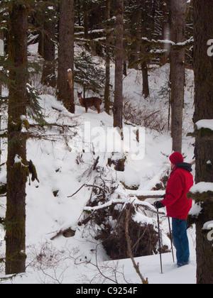 Man beobachtete ein Sitka Blacktail Reh beim Wandern im Schnee bedeckten in Fort Abercrombie State Historical Park, - Stockfoto