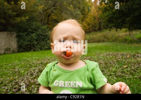 Kleinkind Furchen Stirn wie sie eine Kirschtomate in einem Hinterhof-Garten auf einer Sommer-Nachmittag, Maine, - Stockfoto