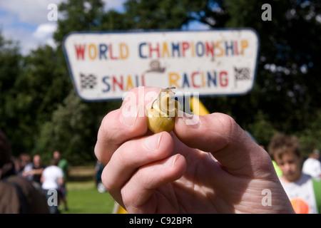 Die schrulligen jährliche Snail Racing Weltmeisterschaft, in Congham, Norfolk, England - Stockfoto