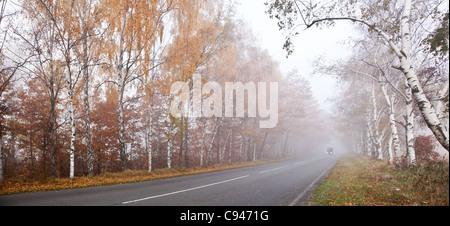 Waldweg in einem nebligen Herbsttag. - Stockfoto