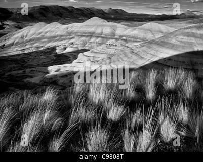 Grass und gemalten Hügeln. John Day Fossil Beds Nationalmonument. Oregon - Stockfoto