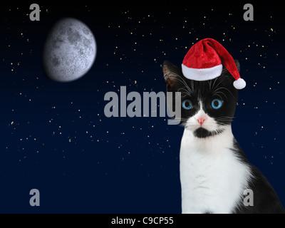 Black And White Kätzchen mit roten Weihnachtsmann-Mütze und dunklen Sternenhimmel mit Mond im Hintergrund. - Stockfoto