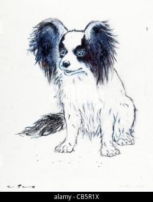 Papillon Hund Portrait - Kugelschreiber auf Papier von Kurt Tessmann - Stockfoto