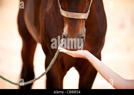 Eine Frau, die Fütterung eines Pferdes, close-up - Stockfoto