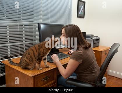 Junge Frau im home-Office mit zwei Monitoren und Tastatur auf Leder-Schreibtisch mit Kätzchen auf Schreibtisch - Stockfoto
