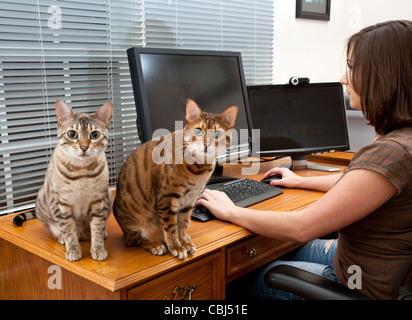 Junge Frau im home-Office mit zwei Monitoren und Tastatur auf Leder-Schreibtisch mit zwei Kätzchen, starrte auf - Stockfoto