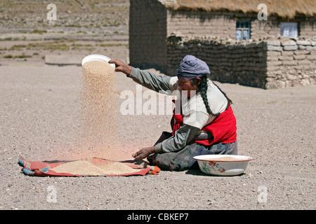 Traditionell gekleidete bolivianischen Frau mit Tress Weizen die Spreu vom Weizen zu trennen, durch den Wind im - Stockfoto