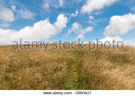 Ein kleiner Fußweg durch hohe Gräser, Max Patch kahl, North Carolina-Tennessee Grenze, Vereinigte Staaten - Stockfoto