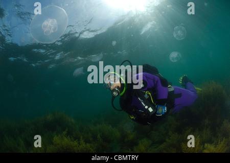 Taucher und Mond Qualle, Aurelia Golden, Piran, Adria, Slowenien - Stockfoto