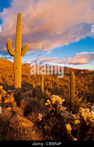 Vier Gipfel (Yavapai: Wikopa, 7657 Füßen (2335 m) in der Höhe, ist ein Wahrzeichen am östlichen Horizont von Phoenix. - Stockfoto