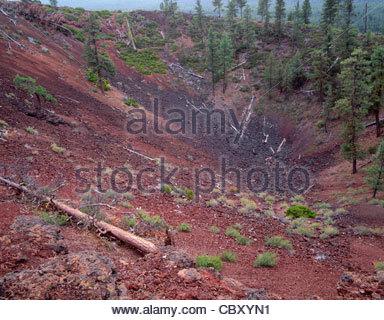 Vereinzelte Kiefern wachsen im Krater des Lava Butte; eine ausgestorbene Schlackenkegel, Newberry National Volcanic - Stockfoto