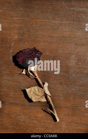 Trockener rose - Stockfoto