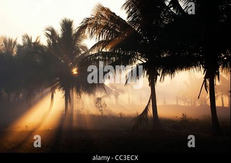 Rauch und Palmen Bäume Silhouette in der indischen Landschaft in der frühen Morgensonne. Andhra Pradesh, Indien - Stockfoto