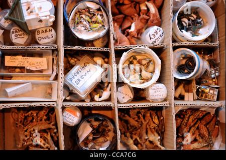 """Ersatzteile Lager hinter einem Stall zu verkaufen Miniatur Tierwelt Modelle Tier-und Pflanzenwelt im """"Miniatur"""" - Stockfoto"""