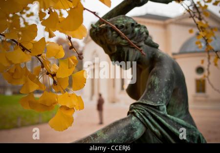 Ginkgo Biloba Hundertjahrfeier der Botanische Garten, Ginkgo Biloba Baum war gepfropft einen weiblichen Zweig. 3. - Stockfoto