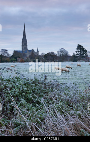 Kathedrale von Salisbury an einem frostigen Wintermorgen, aus dem ganzen der Strandwiesen, Salisbury, Wiltshire, - Stockfoto