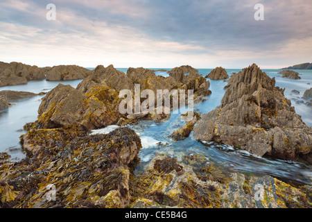 Felsige Küsten der Größe bei Dämmerung, Größe, South Devon, England, Vereinigtes Königreich, Europa - Stockfoto